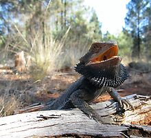 Eastern Bearded Dragon by EnviroKey