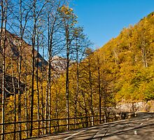 Golden yellow autumn mountain road by Michael Brewer
