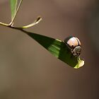 White Beetle by Ali Choudhry