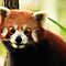 Alma Park Zoo - Red Panda  by Sea-Change