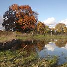 Autumn reflections by graceloves