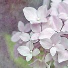 Vintage Pink Hydrangea iPhone / iPod Case by Astrid Ewing Photography
