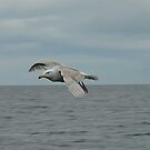 Free As A Bird by Dyle Warren
