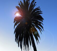 Palm Tree by NuclearJawa