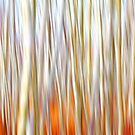 Birch Trees by Jim Cumming