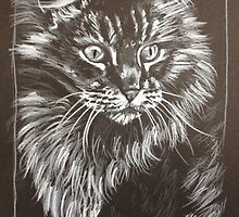 Maine Coon sketch by EJLazenbyArt