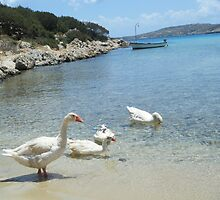 Greek Island Geese in Lipsi by SlavicaB