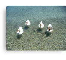 Lipsi Greek Island geese Canvas Print