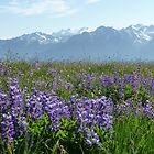 Olympic Mountains by WhiteDiamond