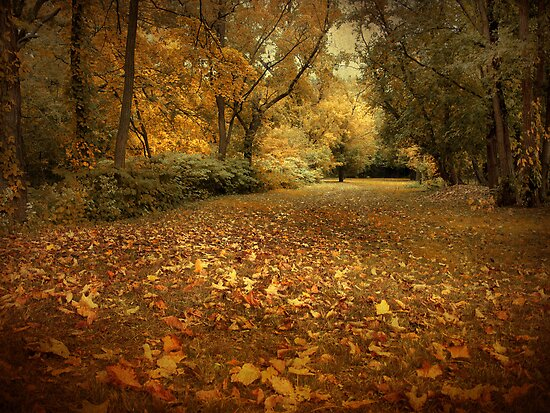 Autumn Passage by Jessica Jenney