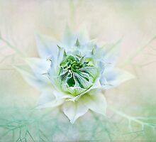 Sweet Mist by Jacky Parker