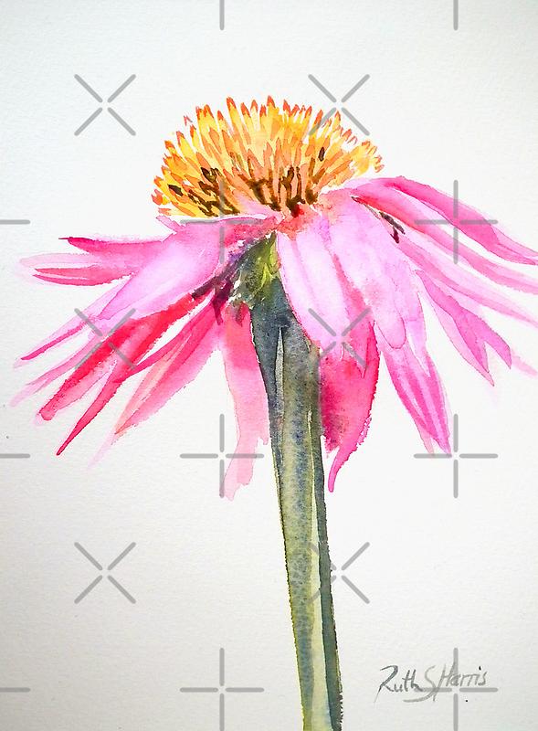 Coneflower by Ruth S Harris