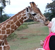 Kissed by a Giraffe.. really.. by Jenny  Riley