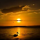 Pelican Sunset by © Les Boucher