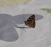 Real Butterfly lands on butterfly tablecloth. Confused! by retroboho