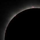 Eclipse - Cairns 2012, Prominences close up by Wayne England