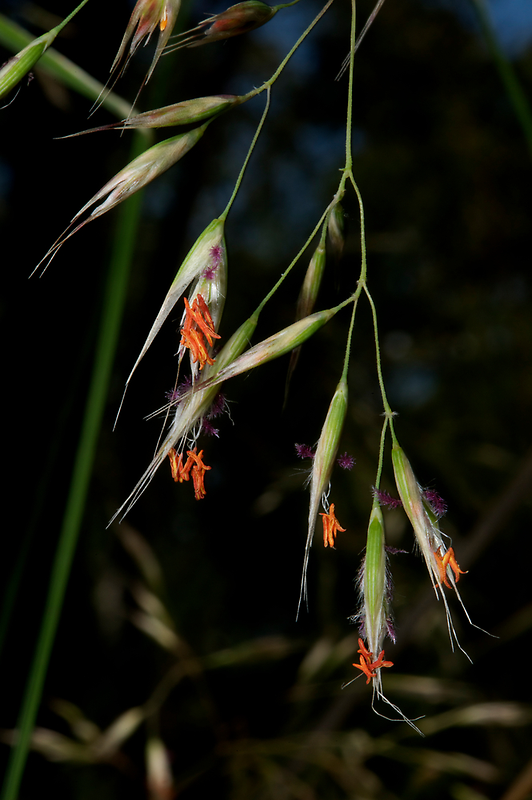 Spear Grass by GP1746