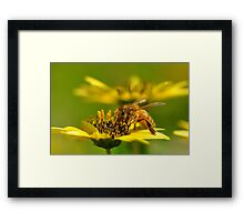 Bee nice! Framed Print