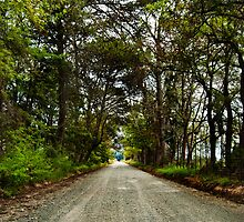 The Open Road by Lindsay Basson