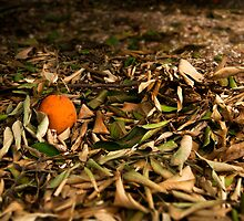 The Orange by Lindsay Basson