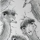 Emu Run! by Sally Ford