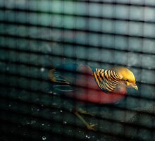 Caged Bird by Bjarte Edvardsen