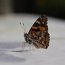 A Friendly Butterfly Lands On Butterfly Printed Tablecloth by retroboho