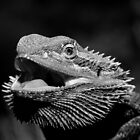 Just Warming Up -  Bearded Dragon  Alice Springs Oz by john  Lenagan