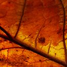 Autum glow ~macro leaf by Karen  Betts