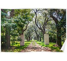 Oak Tree Lined Southern Drive Poster