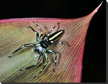 Crabspider by jimmy hoffman