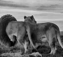 Surveying Their Kingdom. by Mark Hughes