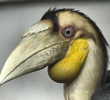 Hornbills on Santosa by Larry Lingard/Davis