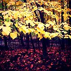 Under The Shade Of Yellow by Josrick