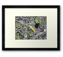 Trying To Hide In Selective Color Framed Print