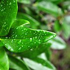 Rain Soaked Leaves by LilCreativeSpce