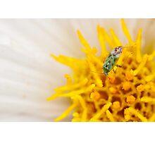 Pollen Lunch Photographic Print