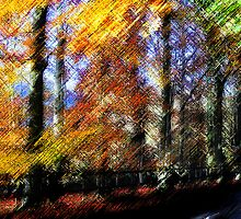 Autumn through a Distorting lens (2) by dmacwill