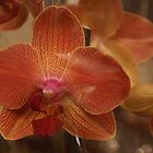 Orchid through cellophane paper. by Gilberte