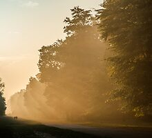 Misty morning at Ashridge Forest by hobgoblin