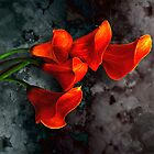 Orange Calla Lilies of Gray by LaRoach