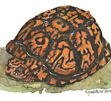 Eastern Box Turtle by Lynn Oliver