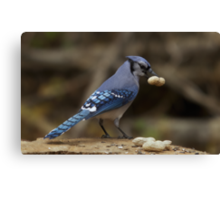 Feeding the Blue Jays Canvas Print