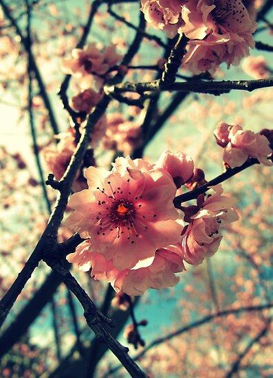 Vintage Blooms by Kitsmumma