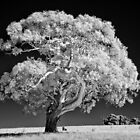 Infrared tree - side view by Hans Kawitzki