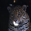 Jaguar by Jon Catt