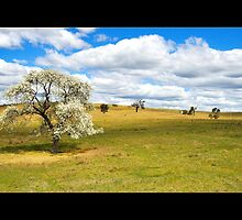 Spring Tree by vilaro Images