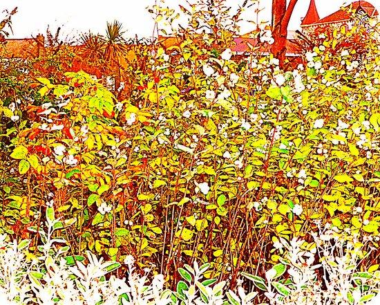 A Winter Hedge by Fara