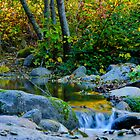 Yuba River 2 by Dianne Phelps