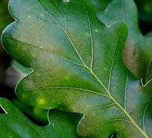 From the Oak Tree by Sally Haldane